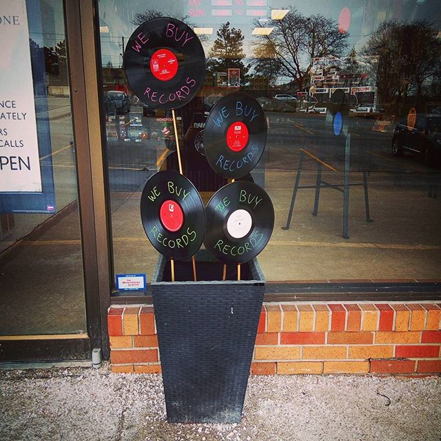 It's the first day of spring and these strange flowers have bloomed in our planter! #burlington #vinyl